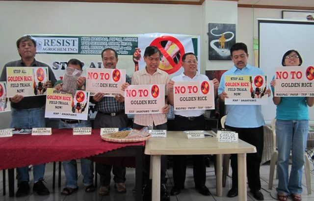 'Field testing of golden rice not safe'